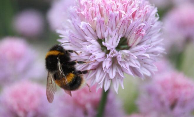 World-Bee-Day-2020